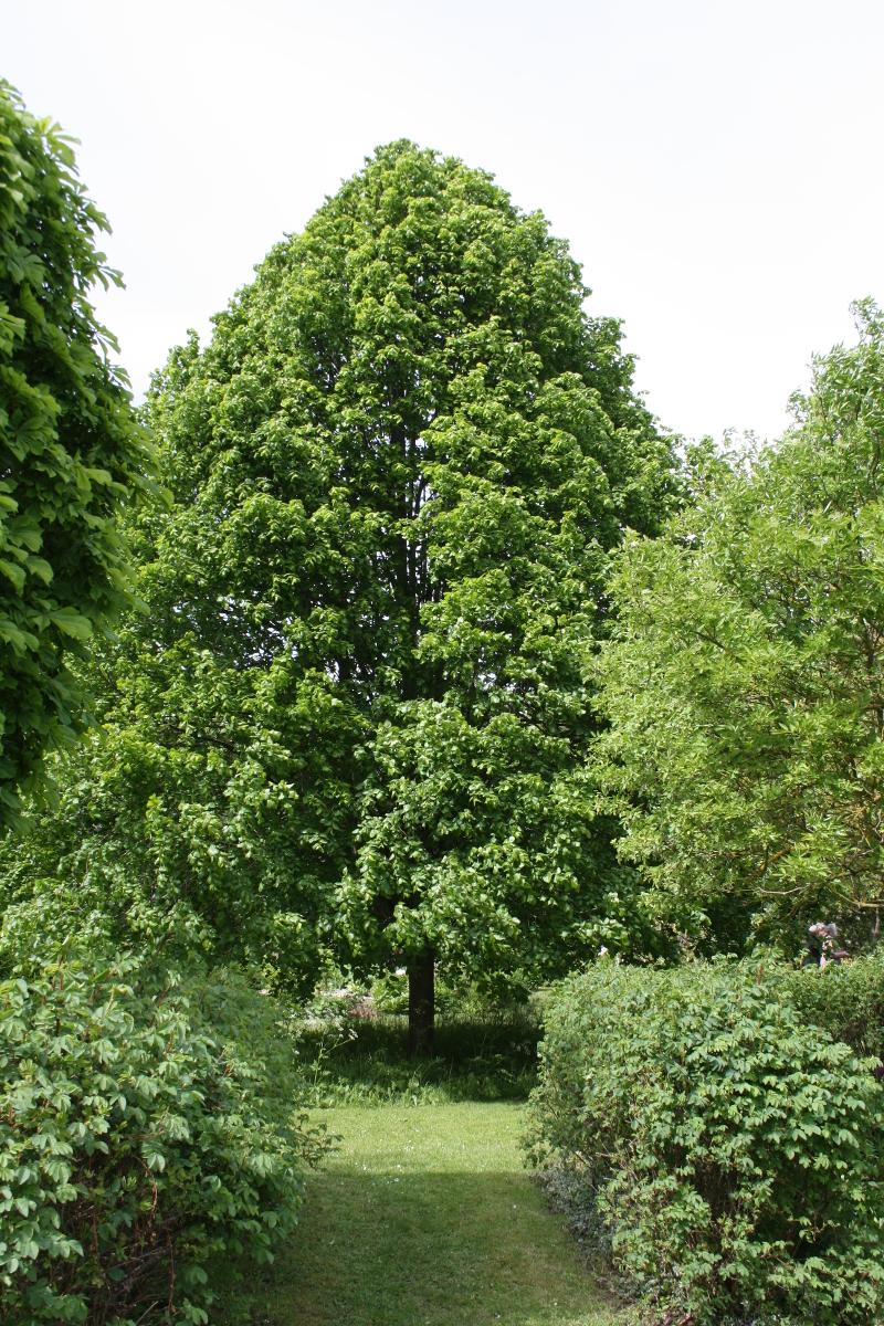 Træ med eng under