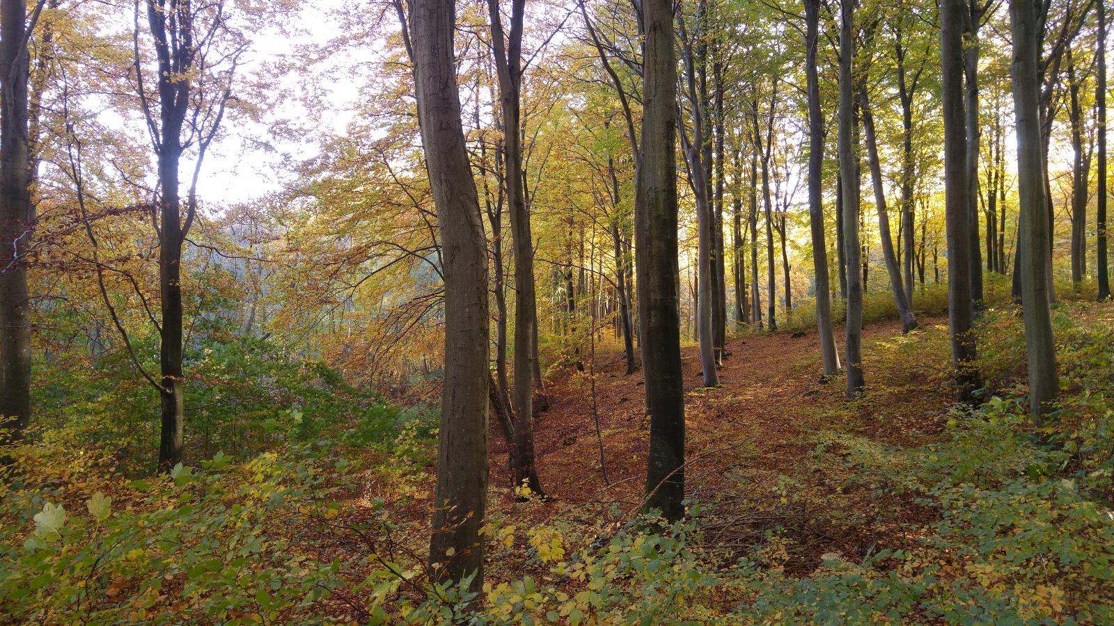 klinteskoven-i-oktober