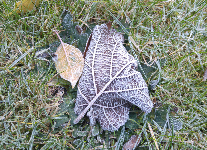 blade-med-frost-i-graesset