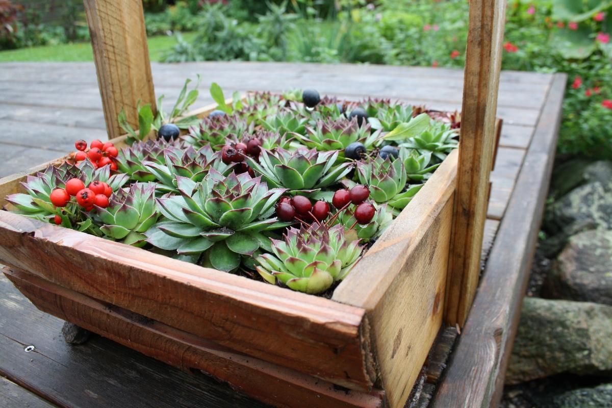 Kurv med husløg og bær